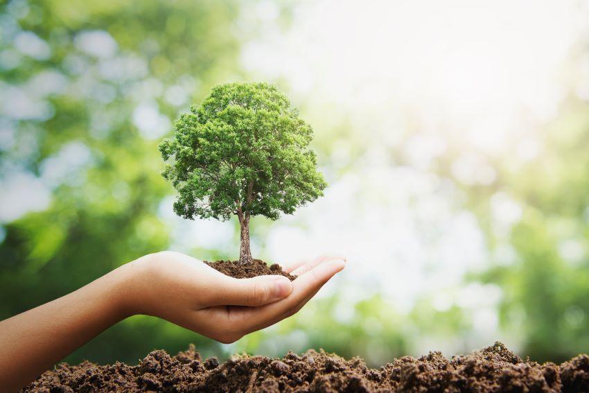 Árbol de la vida: qué es y qué significado tiene.